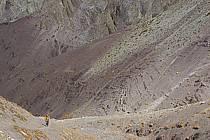 Trek en direction du col de Stok, Ladakh - Trek to Stok pass, Ladakh, ref eb081681LE