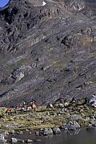 Entre Olléros et Chavin, Trek équestre, Col de Yanashallash 4700 m, ref eb2707-24GE