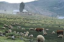 Patagonie, ref ec3187-19LE