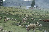 Patagonie, ref ec3187-20GE