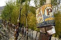 Boîtes de conserve pour protéger les arbres, Village de Stok, Ladakh - Old cans to protect trees, village of Stok, Ladakh, ref ee081815LE