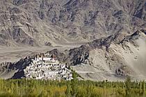 Monastère de Thiksey (Thiksey gompa), Ladakh - Thiksey Monastery (Thiksey gompa), Ladakh, ref ee081934LE
