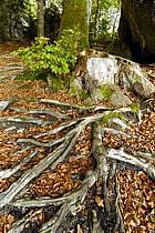 Racines et feuilles mortes, ref fa063425GE