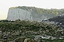 Falaises de craie de Douvres, ref ha040026LE